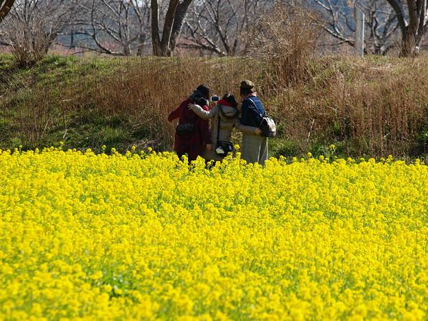 菜の花畑の彼女たち