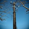 写真: みなみの高圧送電塔
