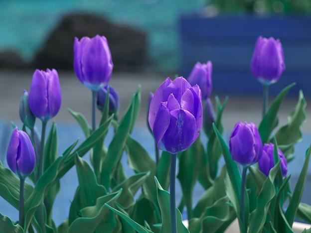 仮想の花びら色