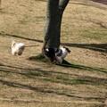 写真: サクラだ!広場だ!!走り回るワン!!!