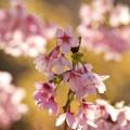 Photos: さくらの里の春