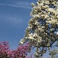 春の三色、揃いました~