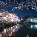 Photos: 神池に映える桜