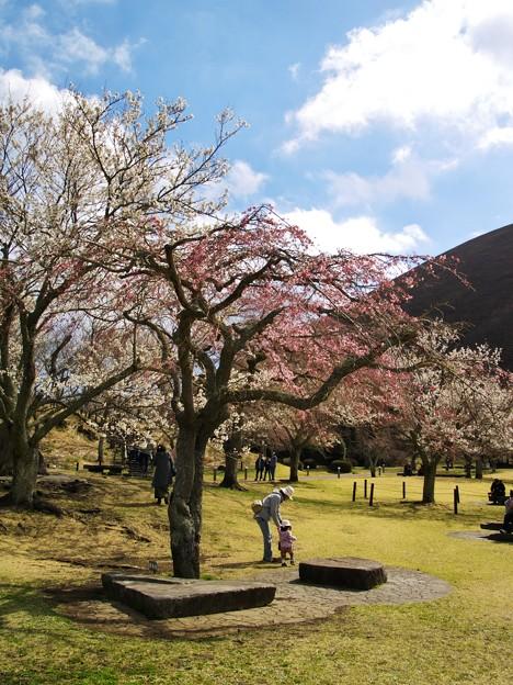 桜咲く下で母娘は…