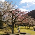 Photos: 桜咲く下で母娘は…