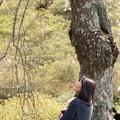 Photos: ワンちゃんを抱え見上げるサクラ