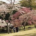 桜を背に自撮りなふたり
