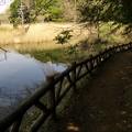 サクラ垂れる湖畔の小径