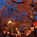 Photos: 御神燈