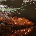 Photos: 神池に映える夜桜と灯りと