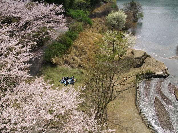橋の下で、桜花見宴会♪
