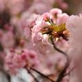 写真: 春の香り