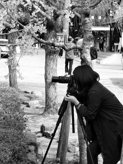 写真: 春を撮る人