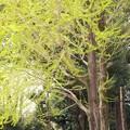 Photos: 新緑の季節