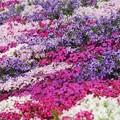 写真: 春がいっぱい♪