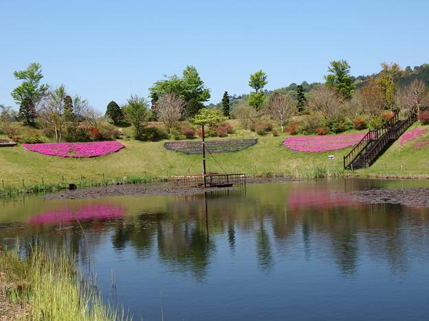 水辺に映える大仁瑞泉郷の春