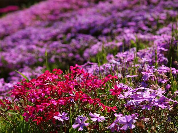 春に色を添えて