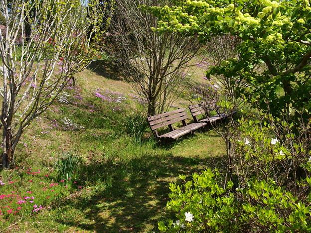 新緑に囲まれたベンチ