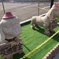 Photos: 交通指導犬