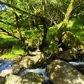 山田川の流れ