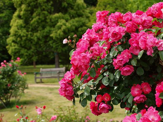 バガテル公園の初夏