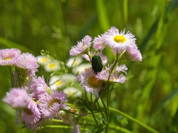 初夏の昆虫たち