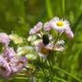 写真: 初夏の昆虫たち