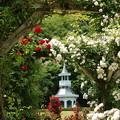 写真: 薔薇に覆われたキオスク