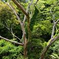 写真: 気になる木