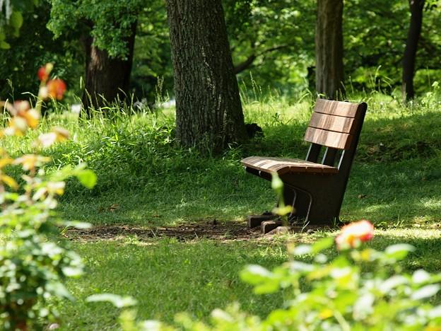 Photos: 木漏れ陽そそぐベンチ