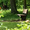 写真: 木漏れ陽そそぐベンチ
