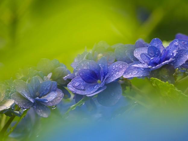 青と緑と紫のグラデーション