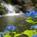 写真: 水辺の碧色