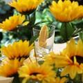 Photos: 夏の元気色に覆われたグラス