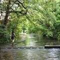 写真: 水辺を散歩 -c