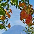 写真: 垣間見る富士のお山