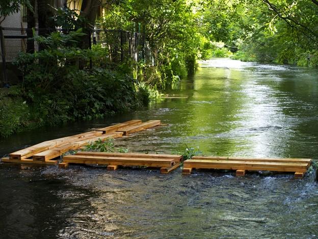 源兵衛川は増水中
