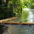 写真: 源兵衛川は増水中
