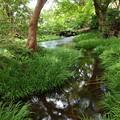 写真: 湧水流れる水辺