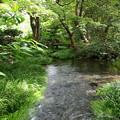 写真: 流るる湧水