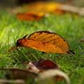 写真: 秋の使者、地上へ舞い降りる