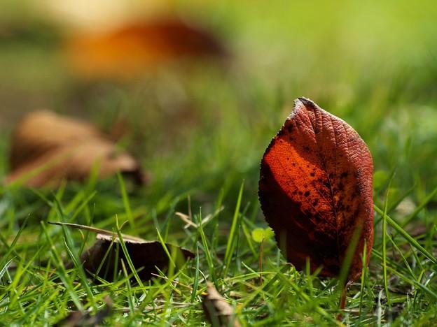 写真: 地上へ舞い降りた秋の使者