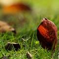 Photos: 地上へ舞い降りた秋の使者