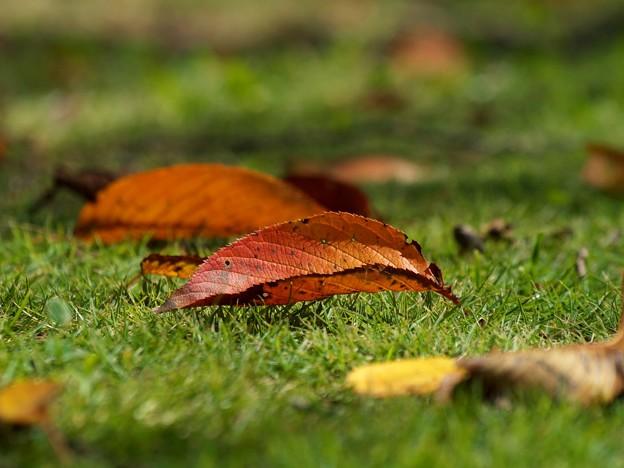 地上へ舞い降りた秋の使者たち