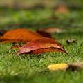写真: 地上へ舞い降りた秋の使者たち