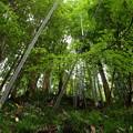 未だ秋色に染まらぬ竹林