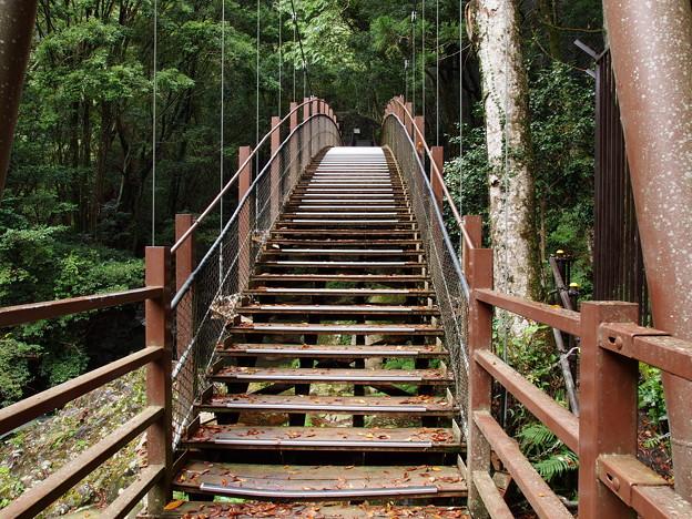 河津七滝の吊り橋