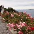 写真: 海を望む丘・秋薔薇の香り