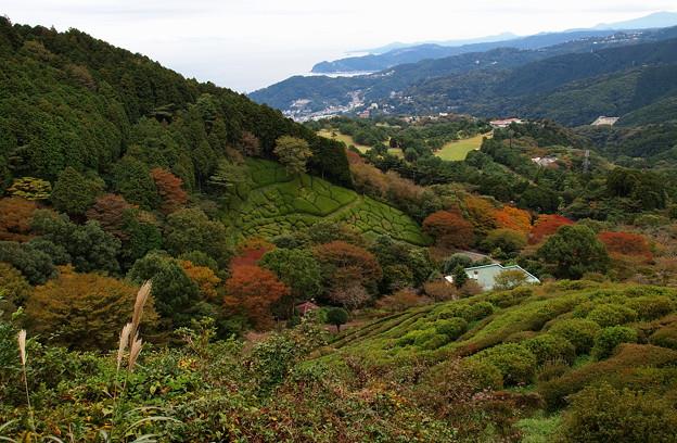 晩秋の箱根山麓