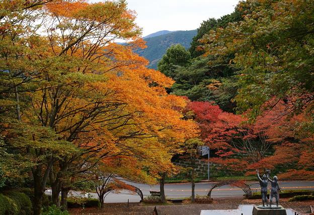 姫沙羅公園の秋色
